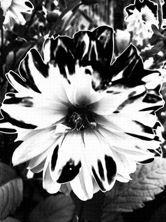 Black n White - BKS Mobile Photography