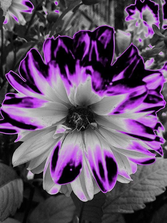 Pretty Flower - BKS Mobile Photography