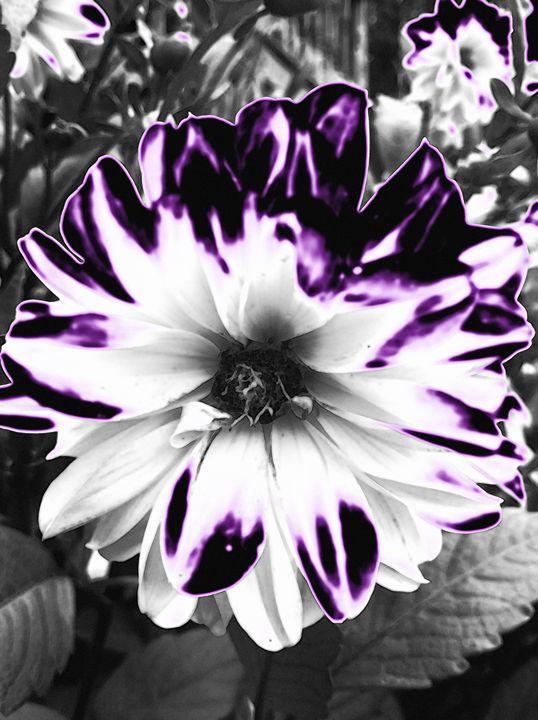 Deep Purple - BKS Mobile Photography