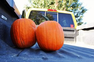 Trucks and Pumpkins