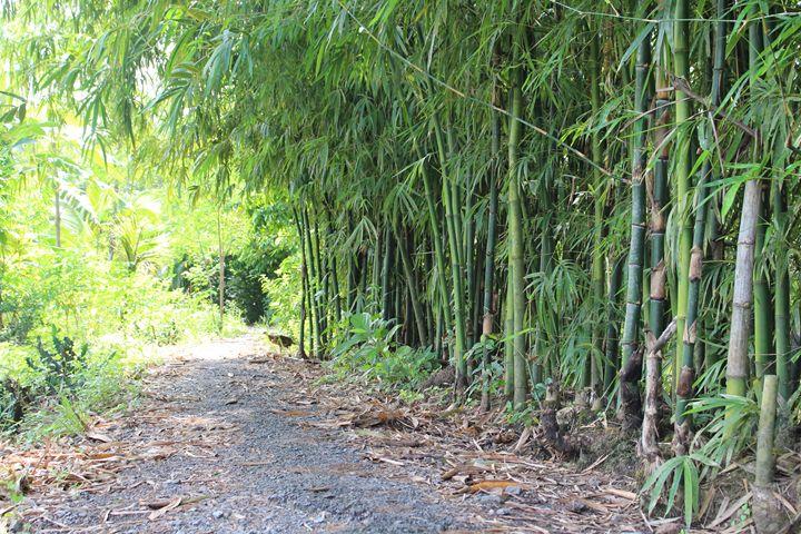 Bamboo - Ruby