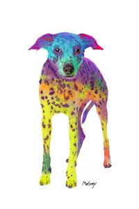 Colorful Dalmatian