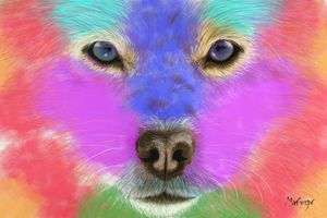 Colorful Closeup Dog
