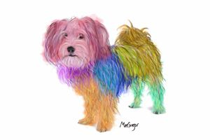 Colorful Maltese Yorkshire Terrier