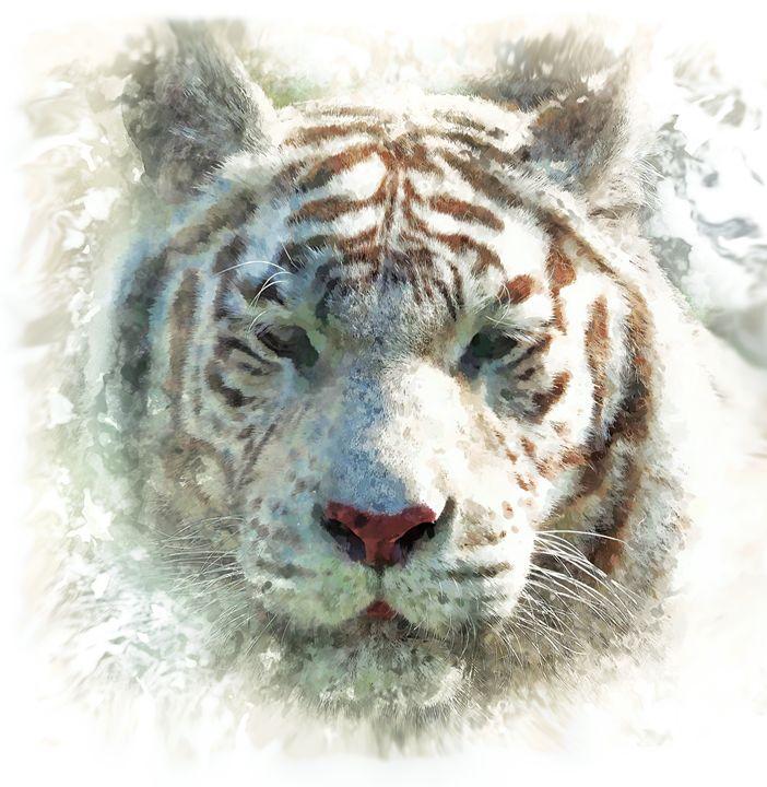 White Tiger - Alan Thompson Art