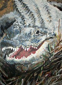 Gray Alligator