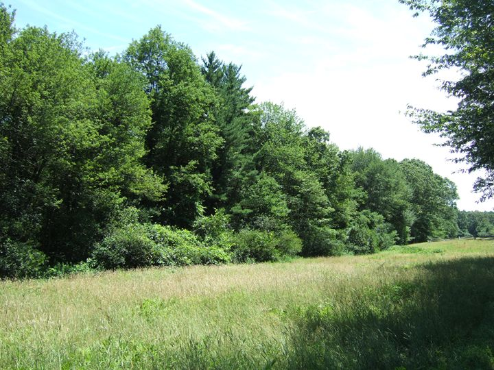 natural hedge - Zephandolf
