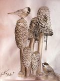 coprinus comatus and chickadees,