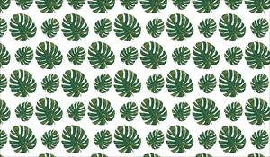 Monstera Leaf Pattern