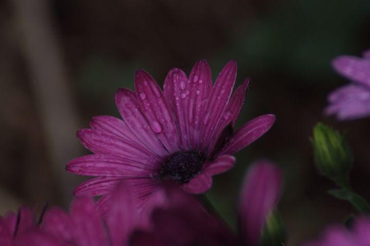 Grandmas Garden - Sami Adams Photography