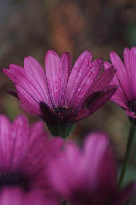 Just a flower - Sami Adams Photography