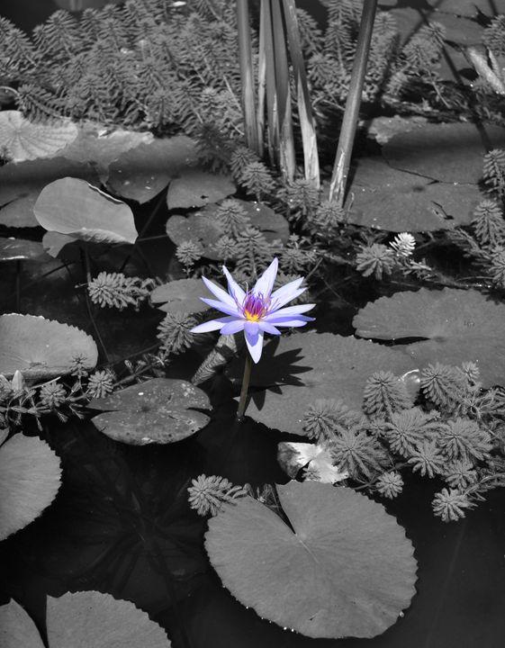 The Lone Flower - MattNaiden Photography