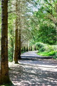 Castlewellan Lakeside Walk