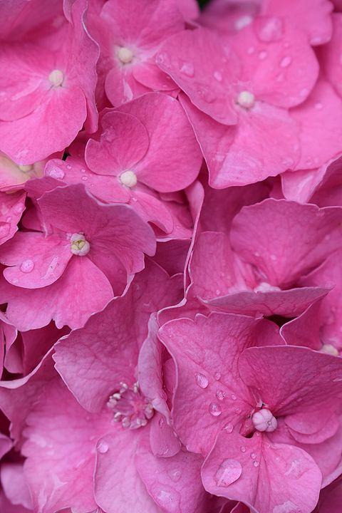 Pretty Pink - Christine56