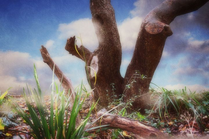 A Little Corner Of Nature - Christine56