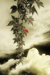 Autumns Evening Song - Christine56