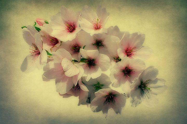 Spring Floral - Christine56