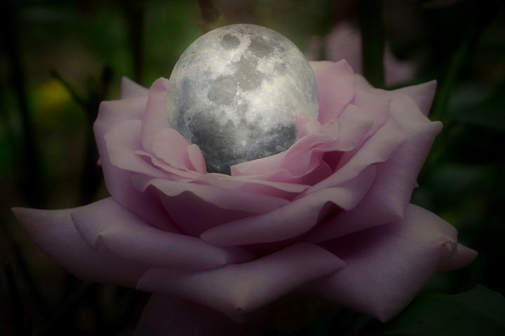 A Rose With A Silver Moon - Christine56