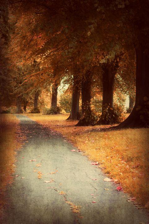 Walking through Autumn - Christine56