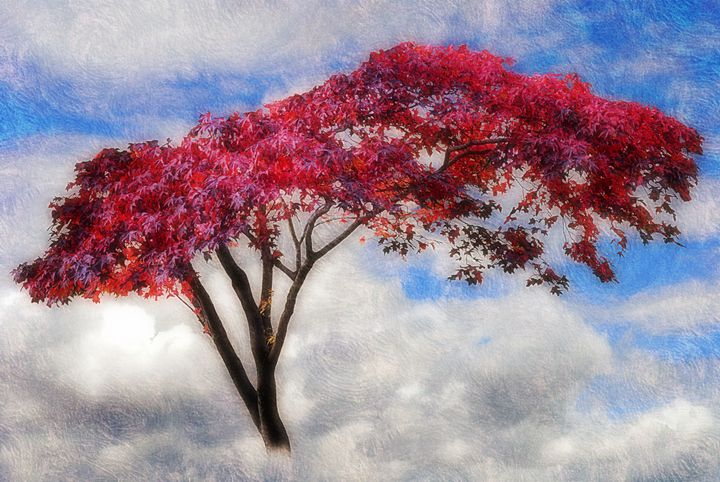 Red Tree in Summer - Christine56