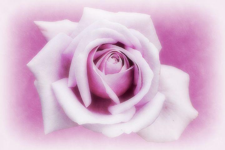 Lavender Mood - Christine56