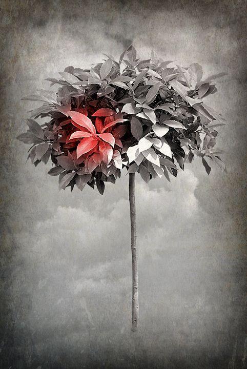 A Dream In Seasons Gone - Christine56
