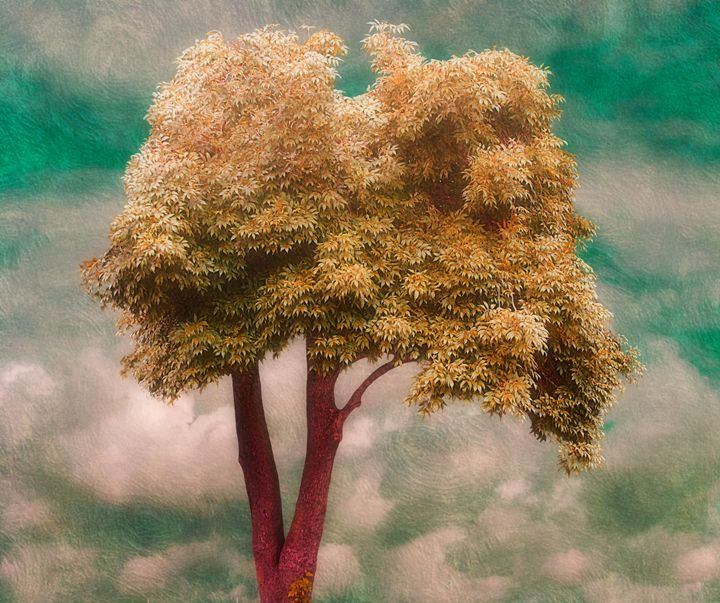 Leaves Of Gold - Christine56