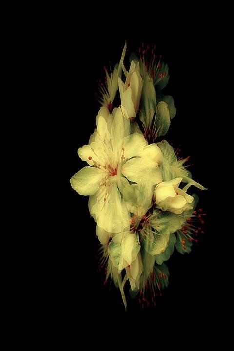 Blossom Fantasy - Christine56