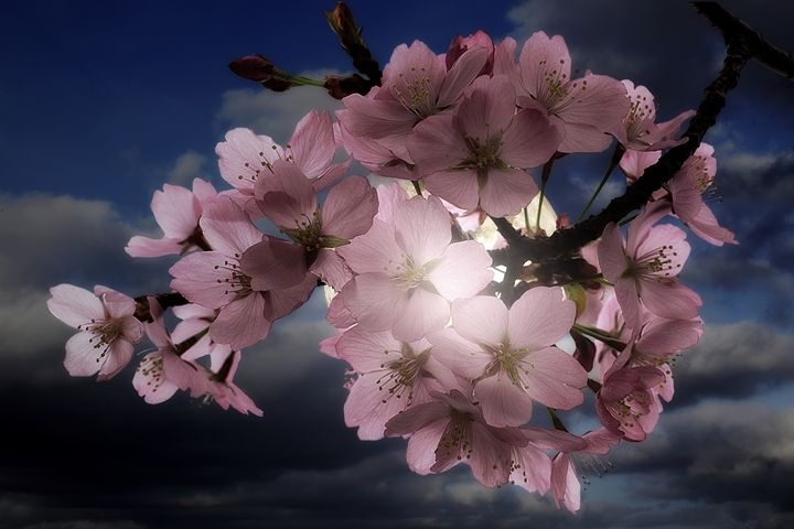 Blossom In Moonlight - Christine56