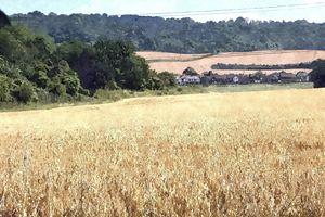 Rural Landscape, England
