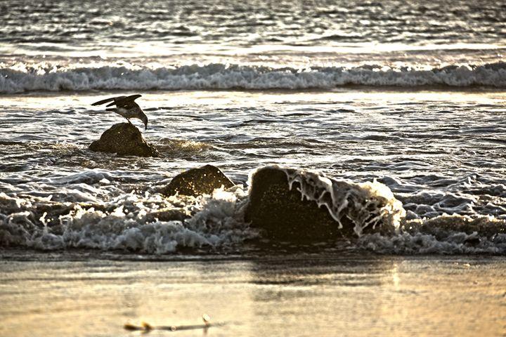Beach, Hotel Del Coronado, CA - Low Speed High Res