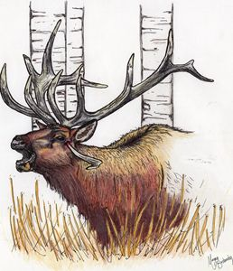 wounded elk
