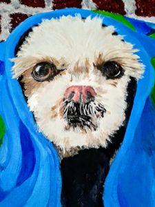 Dog (Bailey)