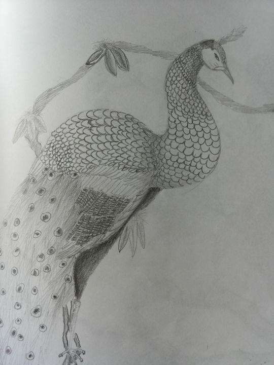 Peacock - Justine