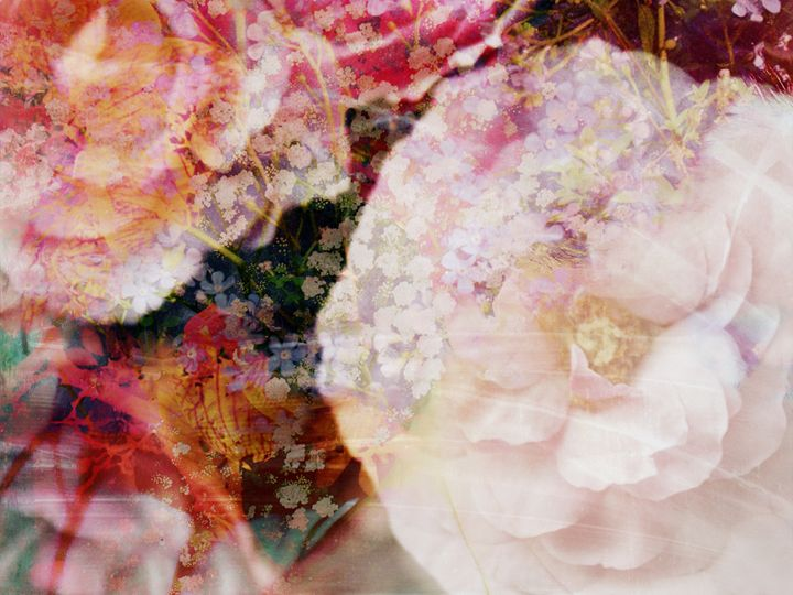 Poetic Blossoms - Flowers by Alaya Gadeh