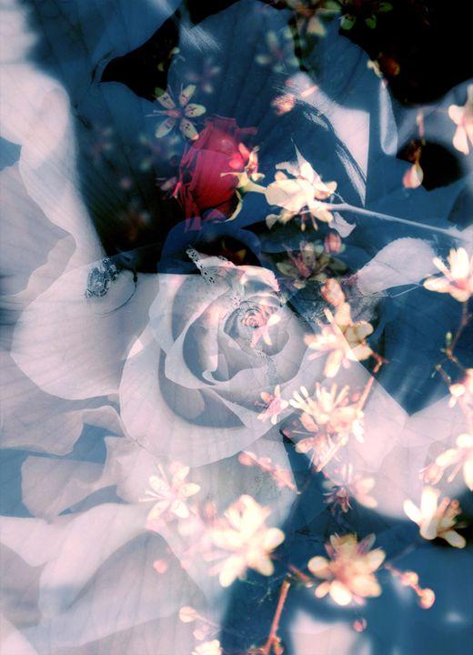 Rose Parfume Blue - Flowers by Alaya Gadeh