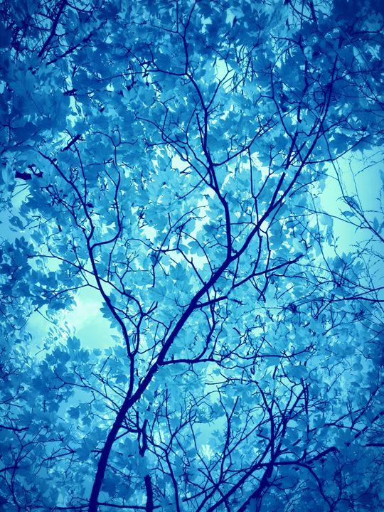 Water Trees - Flowers by Alaya Gadeh