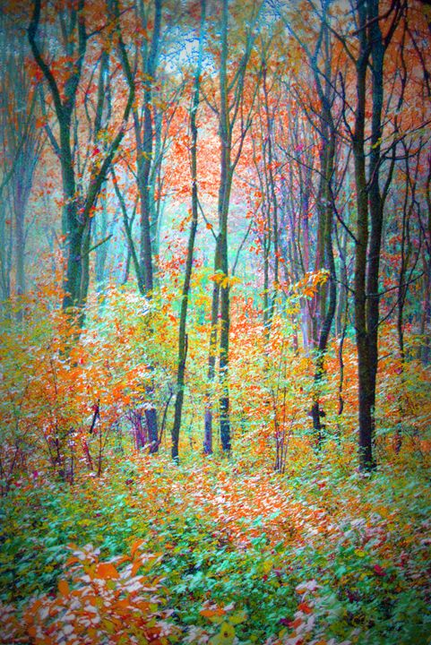 Color Forest IV - Flowers by Alaya Gadeh