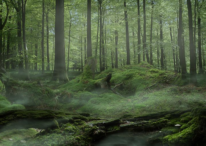 Moss covered Forest - Gallery of Thomas