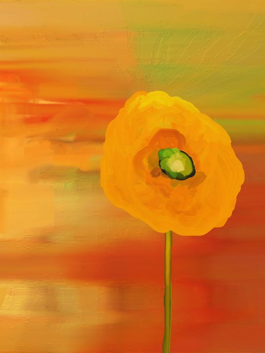 Poppies in Bloom - Floral