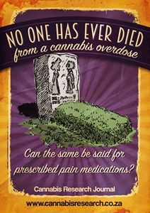 No one has died from a cannabis OD