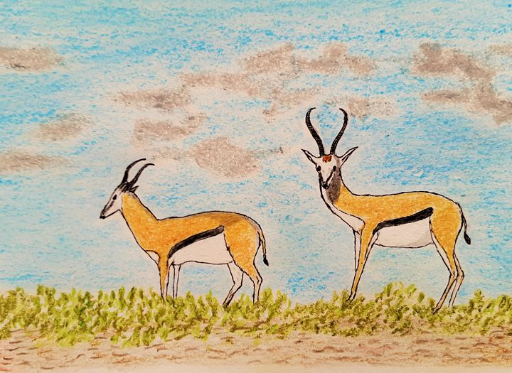 Deer family  Thomsons gazelle - Amitava0112