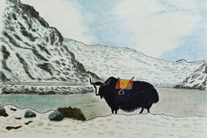 yak in snowy mountains