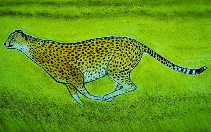 Cheetah - Amitava0112