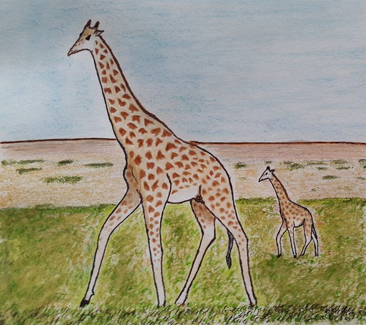 Giraffe  the tallest creature - Amitava0112
