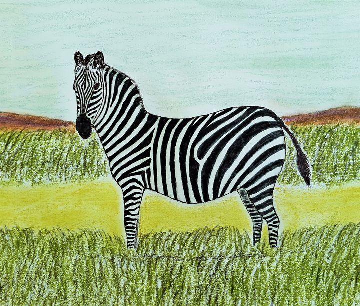 The beautiful Zebra - Amitava0112