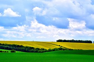 Fields of Wiltshire