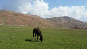 mule in nature