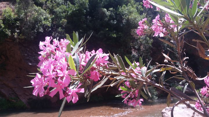 flower - lahcen  picture