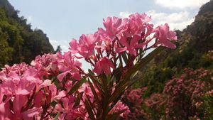 flowers in mountain zone of morocco